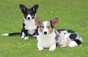 Stella & Dimma