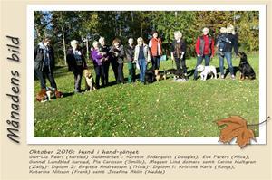 Månadens bild - Oktober 2016 - Hund i hand-gänget