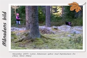 Månadens bild - November 2017 - Lotta Johansson spårar med Hyttbackens Osi