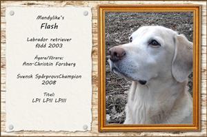 Mandylike's Flash
