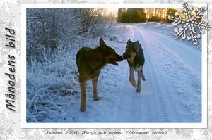 Månadens bild - Januari 2016 - Menja och Kross