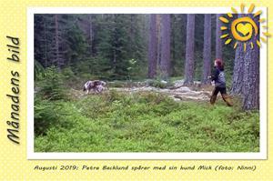 Månadens bild - Augusti 2019 - Petra Backlund spårar med sin hund Mick
