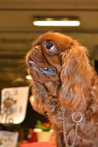 Amy på My dog 2012