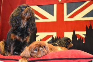 Lucku, Amy, Luna på My Dog 2012