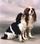 skillnad mellan en Charlie och en Cavalier