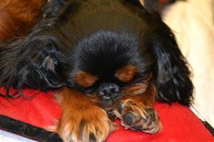 Lucky My Dog 2012