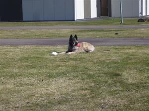 Hundägarakademi kursavsl vt17 007