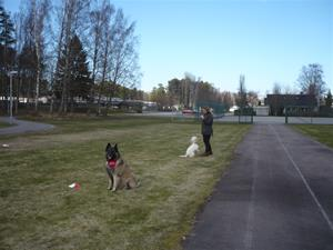 Hundägarakademi kursavsl vt17 008