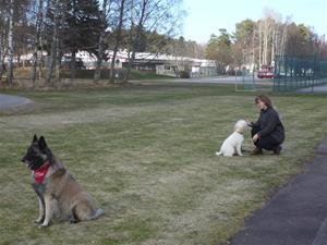 Hundägarakademi kursavsl vt17 009