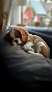 Mimmi sover