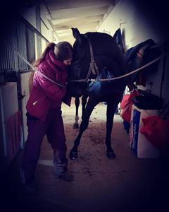 K-vall's häst- och hundhälsa