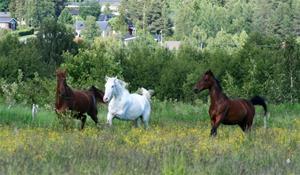 Flash, Hidde och syrrans förra häst Kalle -10
