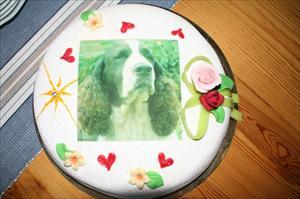 Tårtan valpträff 3