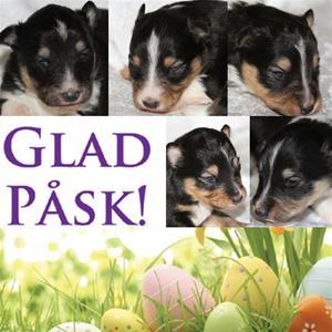 Glad påsk alla