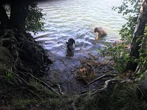 Vill inte hunden gå i vattnet, så gör man det som behövs