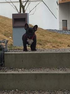 Gunnar på trappan