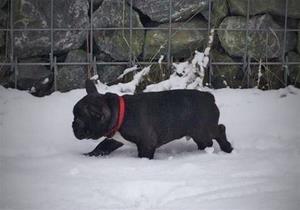 Gunnar i snön