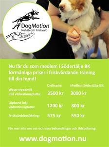 Dog Motion