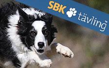 SBK Tävling