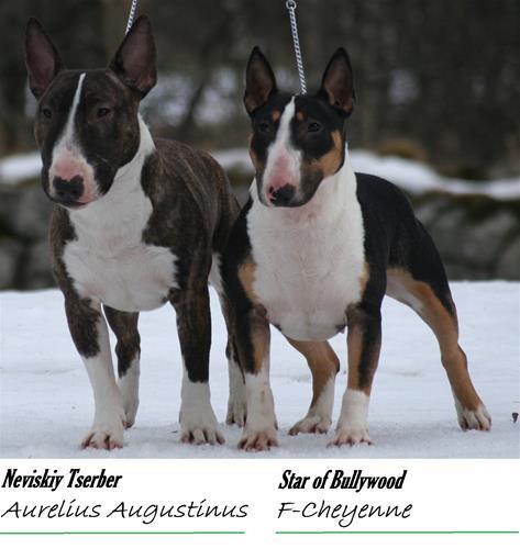 I litter - Click for pedigree