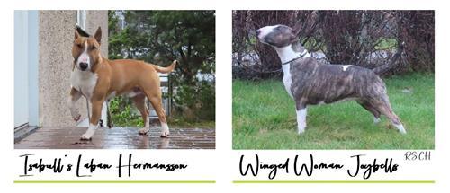 "WW ""U"" - Click for pedigree"
