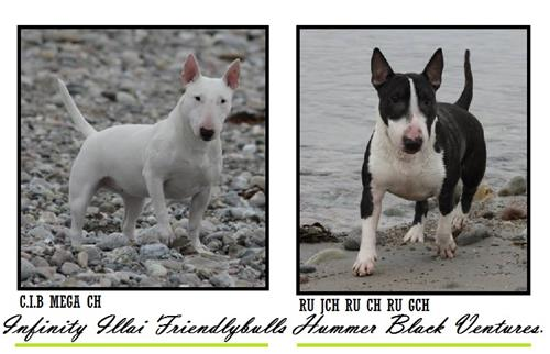 D litter - Click for pedigree