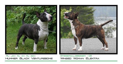 O litter - Click for pedigree