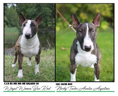 K LITTER - Click for pedigree