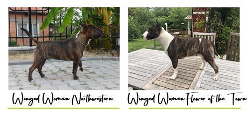 S litter - Click for pedigree