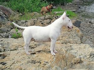 Inifinity Illai Friendlybulls 9 years