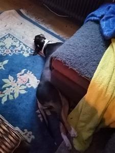 Zelda har trasslat in sig i soffan