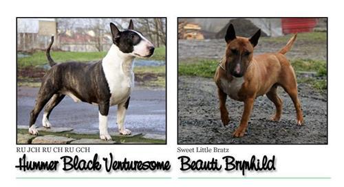 B litter - Click for pedigree