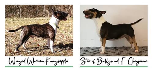 R Litter - Click for pedigree