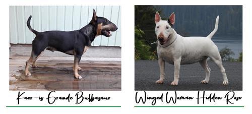 Click for pedigree