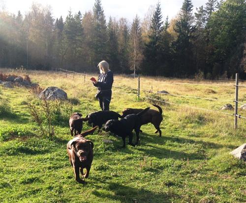 Gull-Britt med ett gäng hundar 2