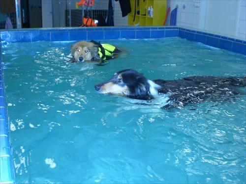 Simning L