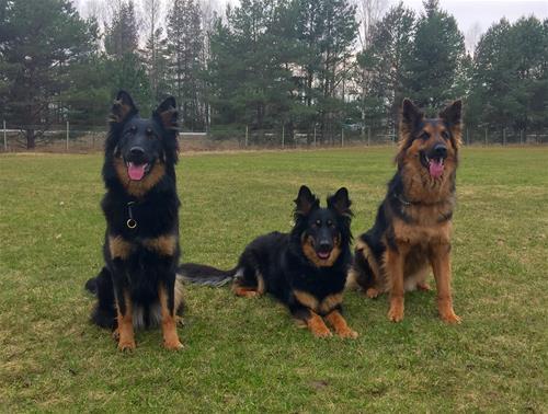 Nellie, Baaya och Fabbe