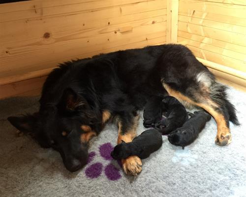En trött mamma