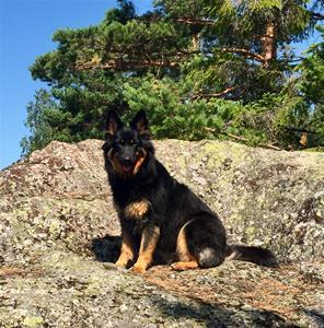 Nellie på sten