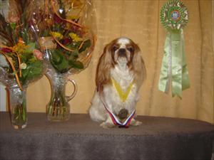 Greta. Charlie Bay Lady Aurora  World Winner Bitch