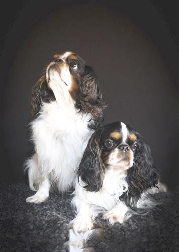 Otto & Ebbe