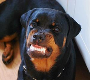 Dizas denta smile.. Lätt för att le