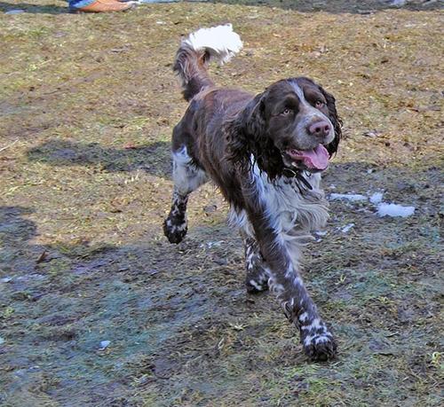 Rufus vissar påatt han har långt vägvinnande steg