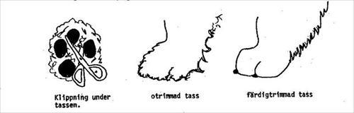 Tass trimning (lånad bild)