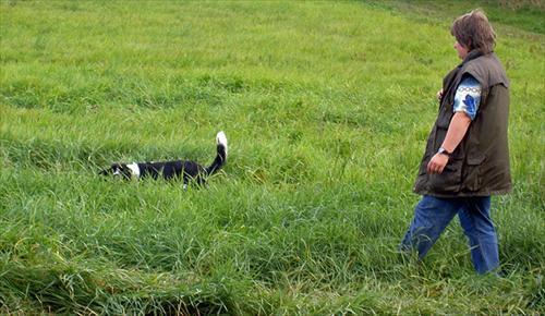 Lea söker av mark i högt gräs