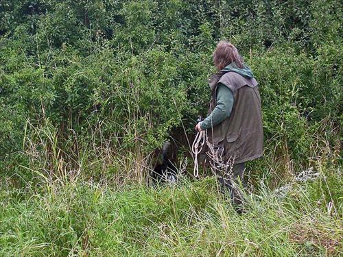 Lea arbetar på i slånbärs buskarnas snår... ingen fågel där idag...