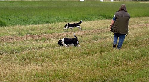 Isak och Lea söker av ängsmark