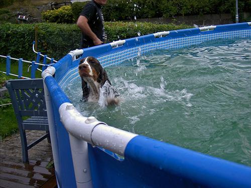 Kiwi behöver gå i simskola nästa år konstaterade Jonas