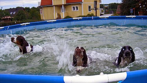 Fira Lea och Kiwi badar i vår pool... sista chansen...