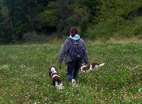 Annette går ett släpp på en klöveräng med Milla där en fågel till gick upp